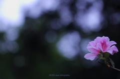 ☆木漏れ日に咲く
