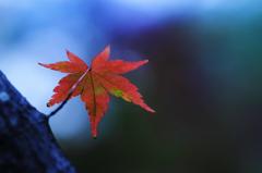 ☆未完の秋