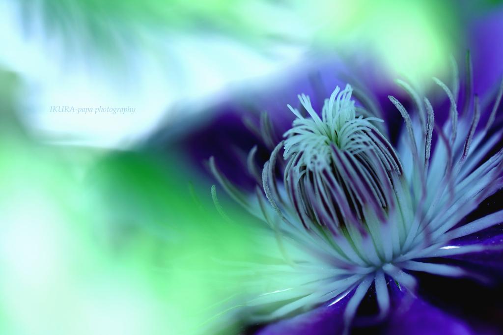 ☆Spiritual Beauty