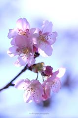 ☆春の予感