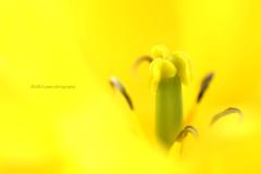 ☆Doctor yellow