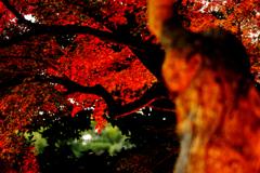 ☆夜叉の森