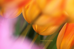 ☆オレンジの風