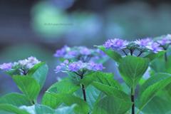 ☆Everyone purple