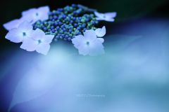 ☆Early Summer Blue♪