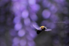 ☆紫に翔ぶ