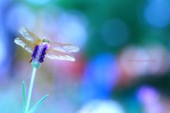 ☆虹色の恋人♡