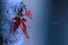 ☆冬の秋化粧