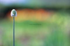 ☆Summer Stick
