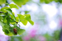☆夏の日の忘れ物