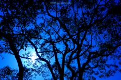 ☆わくわくの森