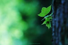 ☆Autumn Green