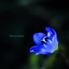 ☆Blue jewel