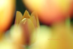 ☆Dream Yellow♪