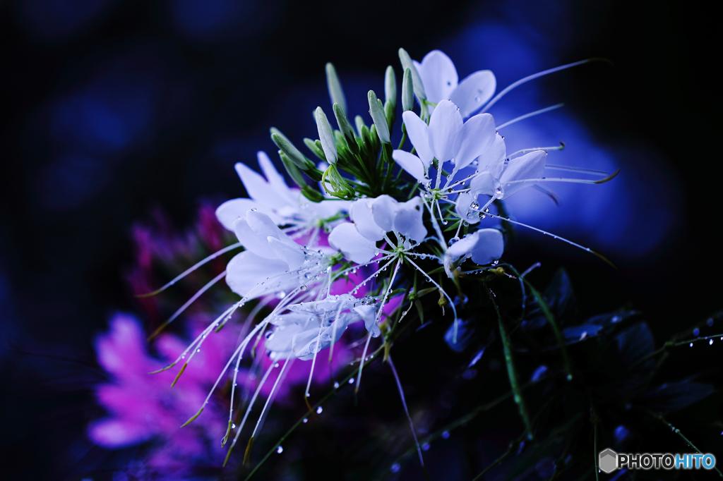 ☆白い輝き
