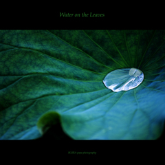 ☆Water on the Leaves