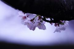 ☆春の一年生♪
