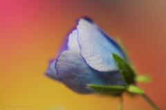 ☆花として・・・