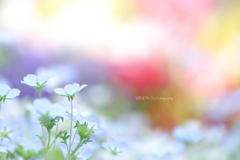 ☆Lovely