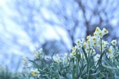 春を待つ娘たち