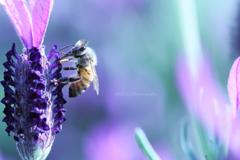 ☆Mr.Bee♪
