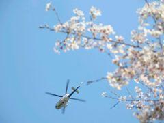 ヘリコプターとさくら