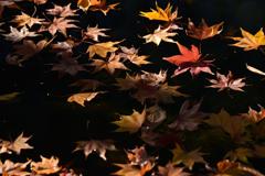 晩秋の芸術