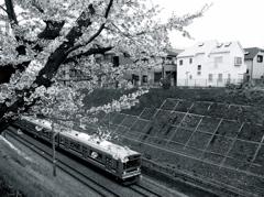 電車の走る町(桜の咲く頃)