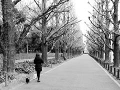 冬だって銀杏並木は美しい