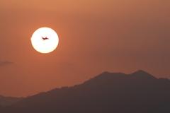 夕陽のT-4 新田原基地473