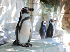 ペンギン1