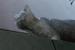 「吾輩は猫である」の猫に会ってきました……