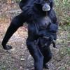 テナガザルの母ちゃん
