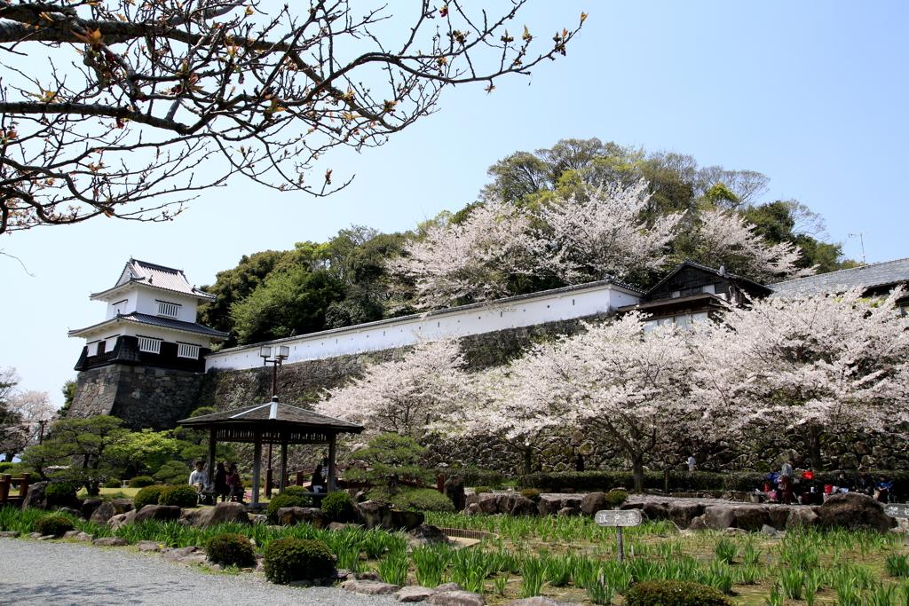 大村公園桜祭り