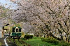 桜の駅 浦ノ崎 1