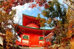 かえる寺 3