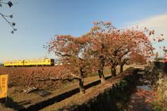 黄色い列車 6