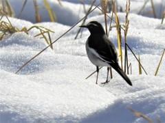 雪・稲・鳥