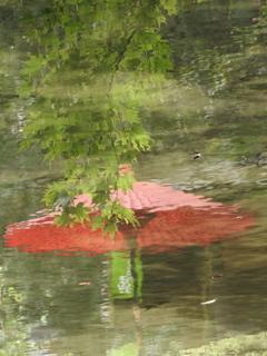 水面の青紅葉