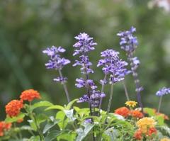 庭の花 寄せてみた