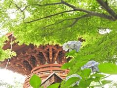花のある風景 久米寺