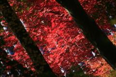 岡寺にて 赤の世界