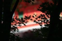 紅葉の奥も紅く