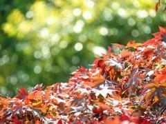 花の御寺の秋の紅