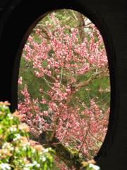 円窓亭の春