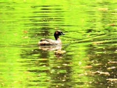 桜浮く水面をjpg