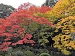 西南院の三色紅葉