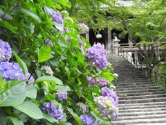 花のある風景 長谷寺