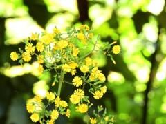 春の陽 名もしらぬ花