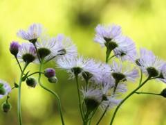 野の花ダンシング
